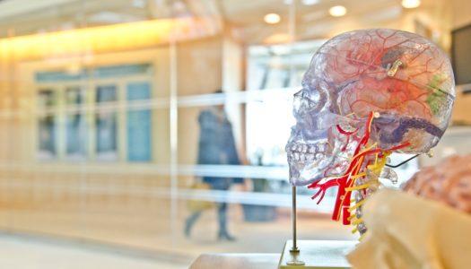 O wykorzystywaniu w szkole wiedzy z zakresu neurologii – rozmowa z dr Lori Desautels