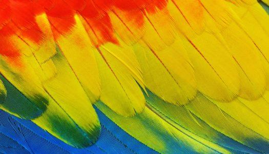 Edukacja w pięciu kolorach, czyli moje refleksje na temat książki Ludwiki Michałowskiej